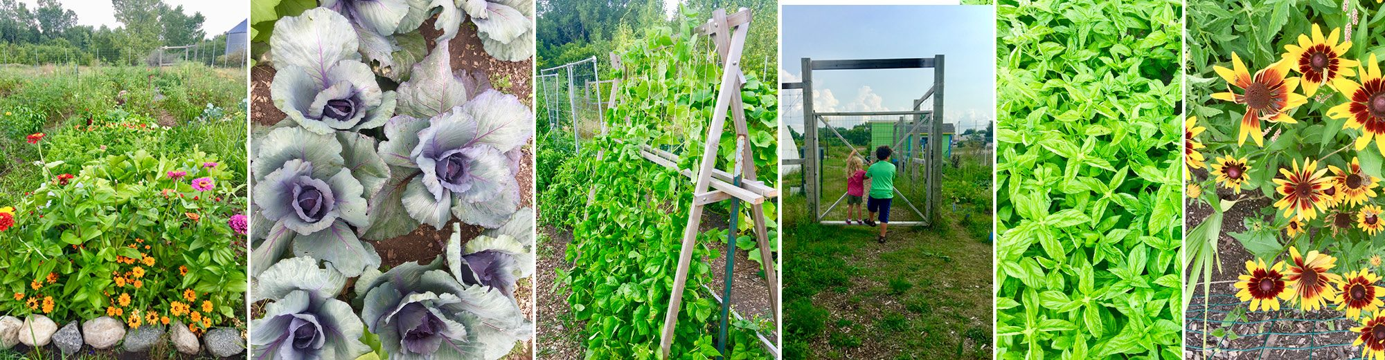 New Ulm Community Garden at Putting Green